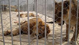 باغ وحش اروميه