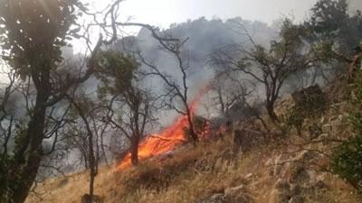 آتشسوزی در جنگلهای کوه خامی در گچساران