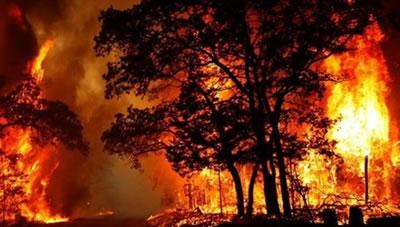 آتش سوزی جنگل های کهکيلويه